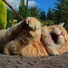 Karaoke kitty by turniptowers