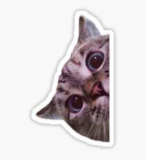 Peekaboo Sticker