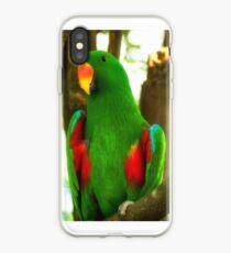 Eclectus Parrot iPhone Case