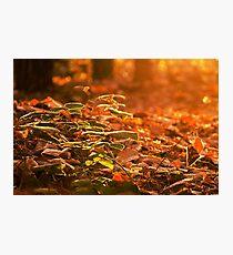 Autumn woodland floor Photographic Print
