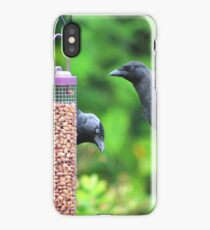 Young jackdaws on bird feeder iPhone Case/Skin