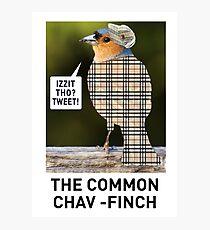CHAV-FINCH GREETING CARD Photographic Print