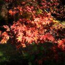 Autumn by Bernard Cavanagh