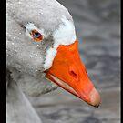 Greylag Goose by Chris Ayre