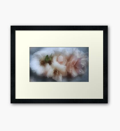 The Softness of Roses Framed Print