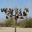 Shoe Tree by © Loree McComb