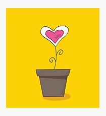 Flower of love. Beautiful love flower : romantic symbol Photographic Print