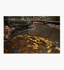 Fall Swirl Photographic Print