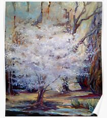 FUMC Cherry Trees, oil on canvas Poster