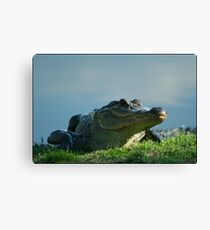 Gator I Canvas Print