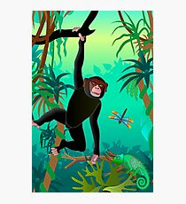 chimpanzee Photographic Print