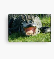 Gator Smile Canvas Print
