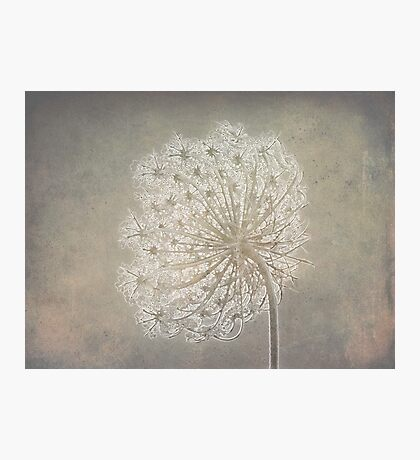 Lacey Loveliness Photographic Print