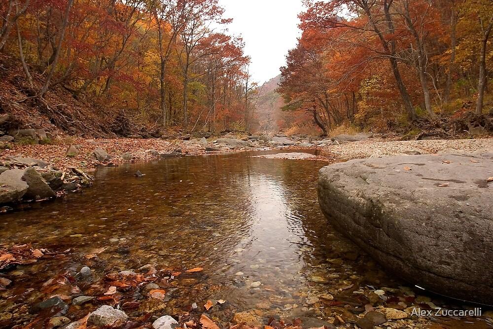 Autumn Stream - Juwangsan National Park, South Korea by Alex Zuccarelli