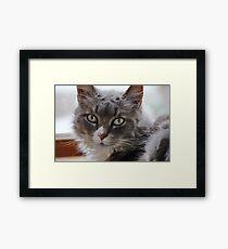 Portrait of Rinnie Framed Print