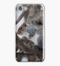 Squirel in a Tree iPhone Case/Skin