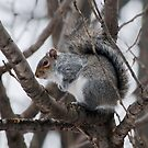 Squirel in a Tree by Barry Doherty