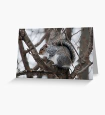 Squirel in a Tree Greeting Card