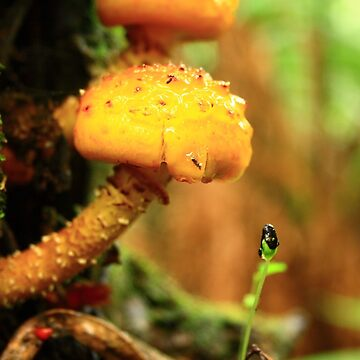 Fungus at Black River far nor west Tasmania , Australia by phillip24