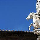Rooftop in Siena by Studio8107