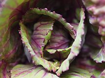 Cabbage by Tom McDonnell