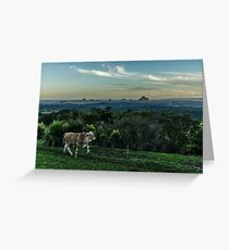 Cattle of Maleny Greeting Card