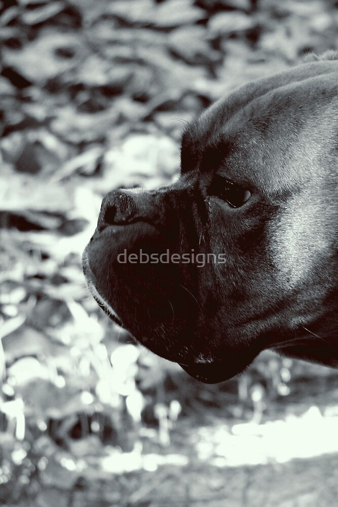Boxer Profile by debsdesigns