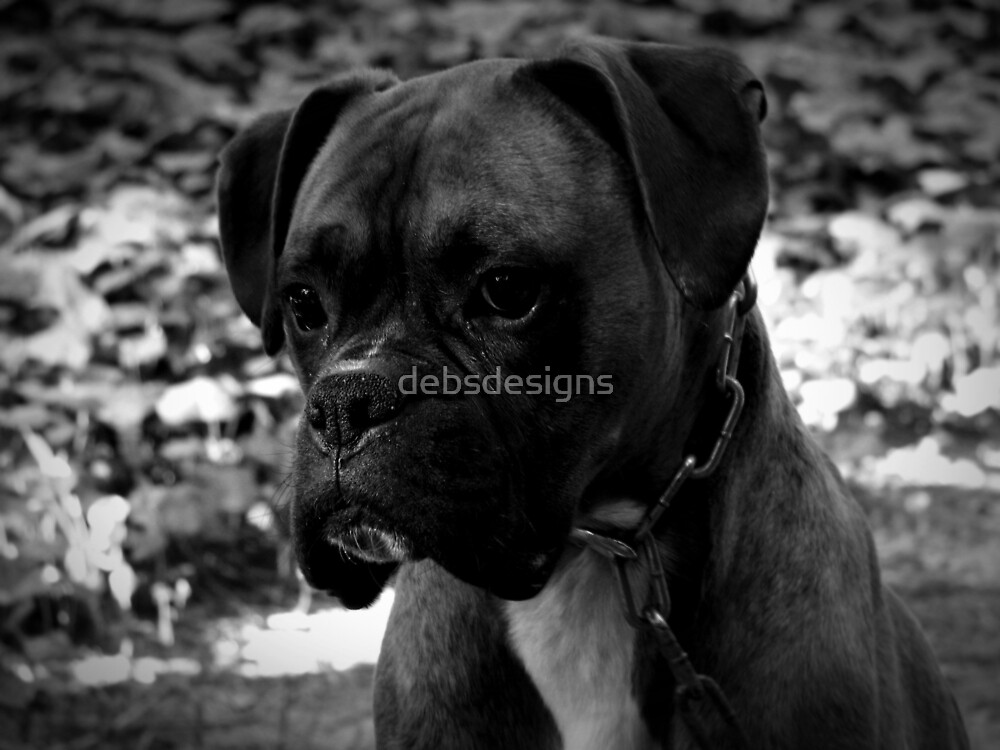 Boxer by debsdesigns