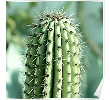 cactus photography Poster