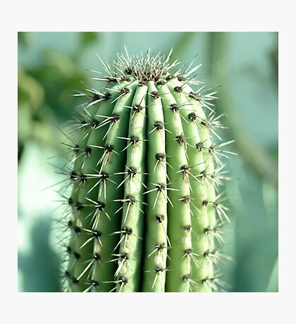 cactus photography Photographic Print
