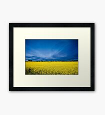 Golden Canola Framed Print