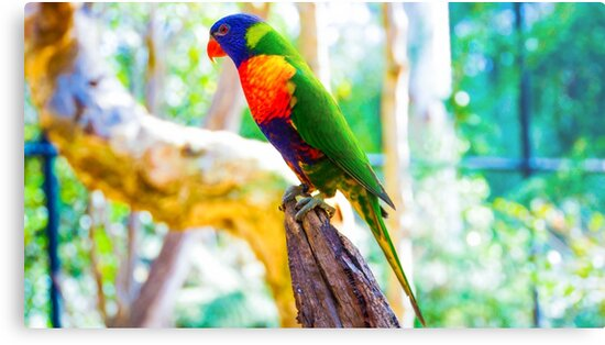 Rainbow Lorikeet on a Tree Stump by sjphotocomau