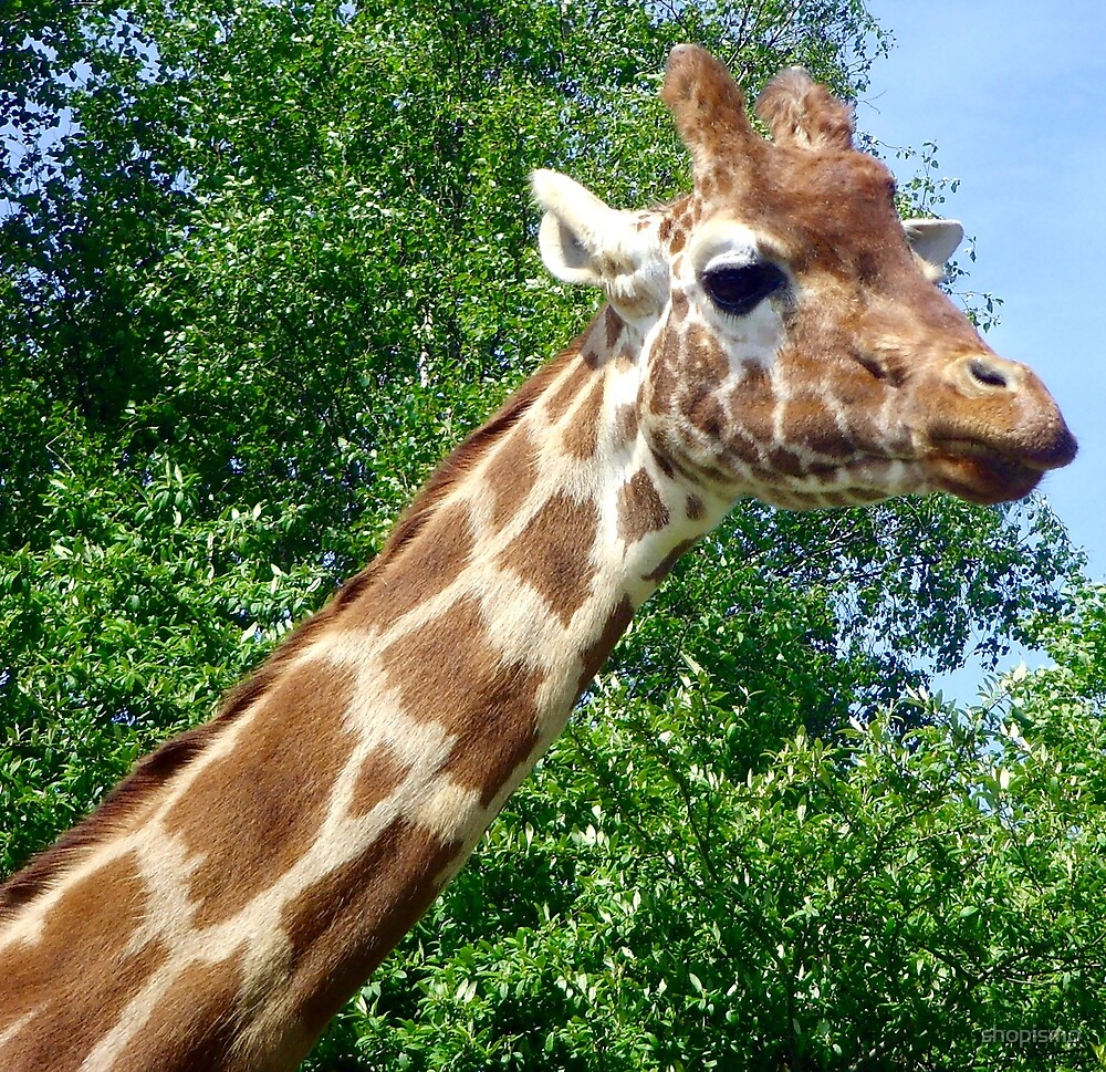 Giraffe by shopismo