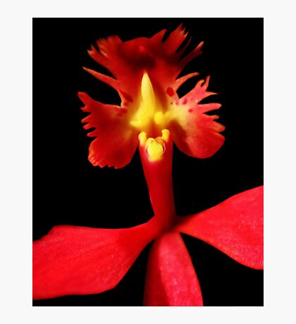 Rooster Tale - Orchid Alien Discovery Photographic Print