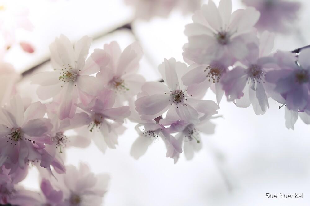 Flowers by Sue Nueckel