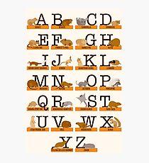 Rodents Alphabet Photographic Print
