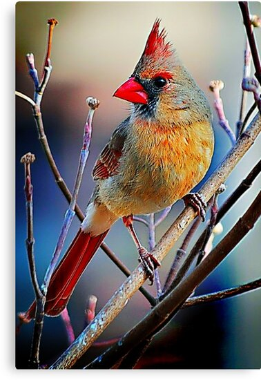 Little Miss Cardinal by Tracie Louise