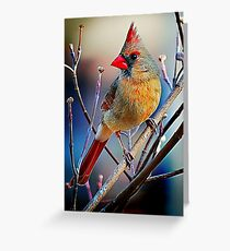 Little Miss Cardinal Greeting Card