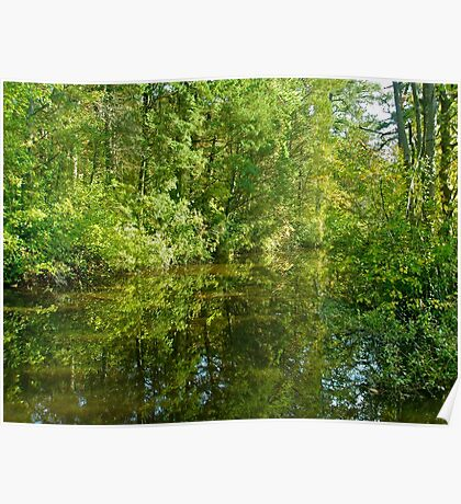 Creek At Whitesbog - Browns Mills - New Jersey - USA Poster