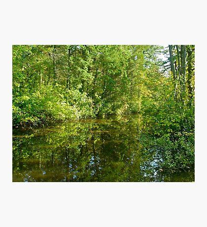 Creek At Whitesbog - Browns Mills - New Jersey - USA Photographic Print