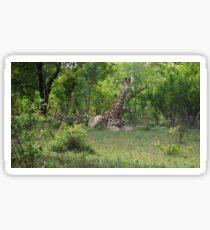 Giraffe in South Africa Sticker