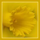 Cancer Council Of Australia - Daffodil Day by Sharon House