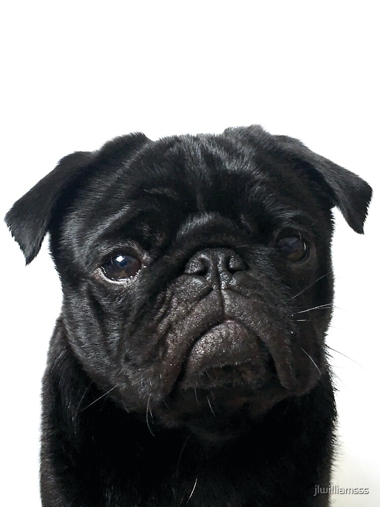 Hugo - The Black Pug by jlwilliamsss