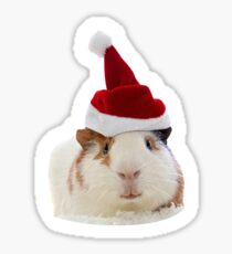 Christmas Guinea Pig in Santa's hat Sticker