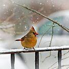 Winter Beauty by AnneDB
