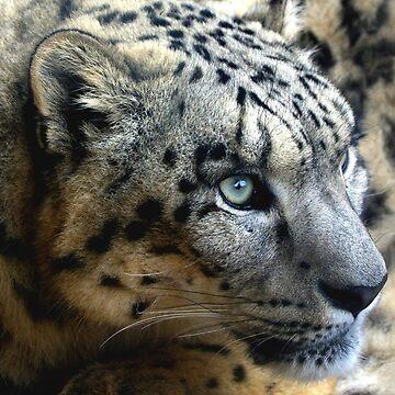 Snow leopard by Parmjit-Flora