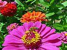Happy Honeybee by FrankieCat