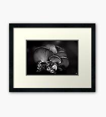 Shelf Fungus Monochrome Framed Print
