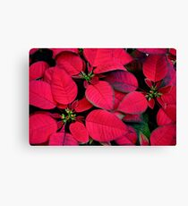 Red Poinsettias For Holiday Cheer Canvas Print