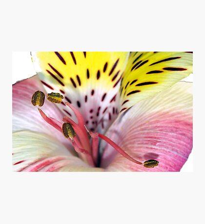 Flower fireworks Photographic Print